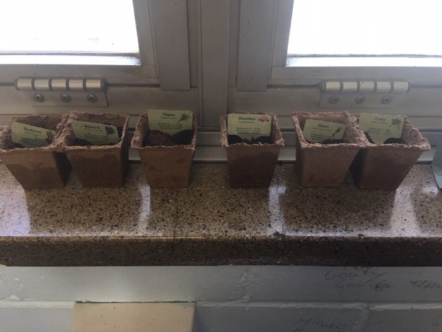 Support Unit students have started a window garden